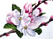 Appple-Blossom-001