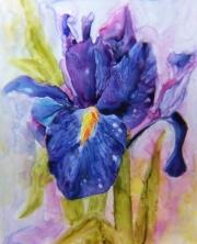 Wet-Iris