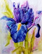 Wet-Iris-11-20-2014-1-33-07-PM-1552x1984